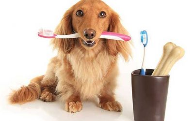 Specialized grooming packages at Just Groom.