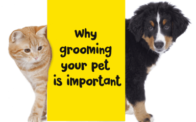 Why grooming your pet is important